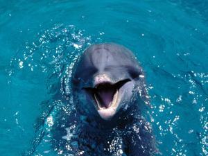 The-best-top-desktop-dolphin-wallpapers-hd-dolphins-wallpaper-6
