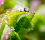 The beauty of small things: a voyage into a garden'smicrocosm