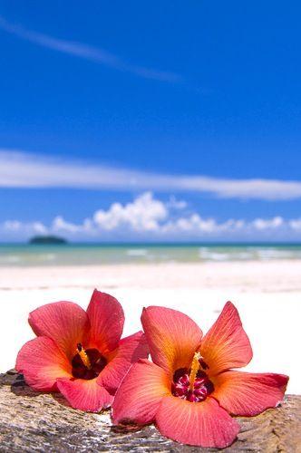 38b4c9c6b594bcf119be76c33abb20df--hibiscus-flowers-beach-flowers